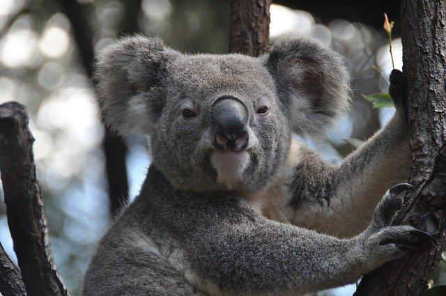 オーストラリア森林火災野生動物
